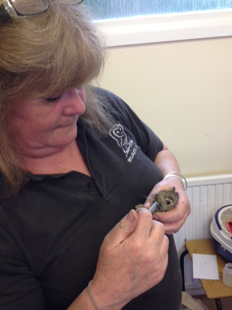 FFT Debbie and baby rabbit