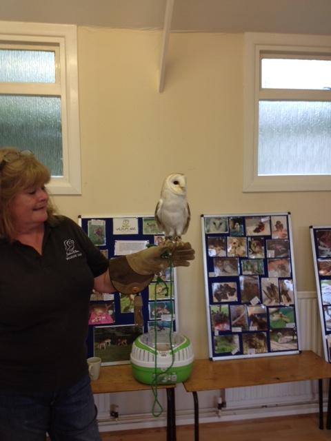 FFT Ozzie Owl2